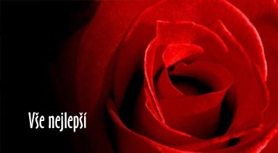 růže k narozeninám Přání k narozeninám   květ růže | poslat prani.cz růže k narozeninám