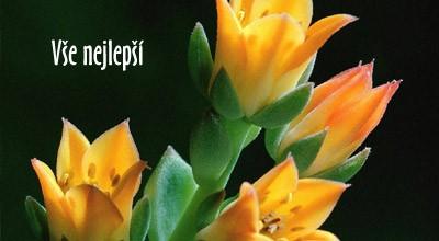 přání k svátku adéla Přání k svátku   Adéla | poslat prani.cz přání k svátku adéla